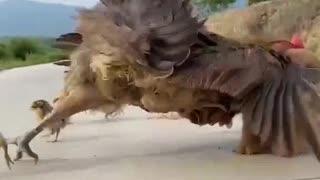 Look dog eat egg chicken