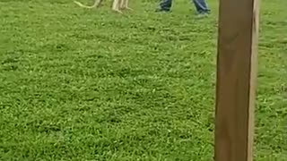 Playing with a Young Kangaroo