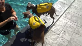 Dogs First time Swimming