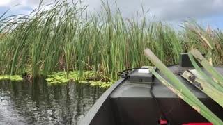 Duck Boat on Lake Okeechobee
