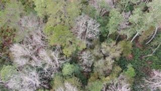 Where Did You Sleep Last Night - In The Pines - Ocala National Forest Drone Footage