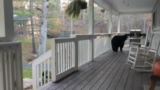 A Quick Drop-in by the Bear Family