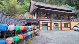 Colorful lotus lanterns to celebrate Buddha's birthday