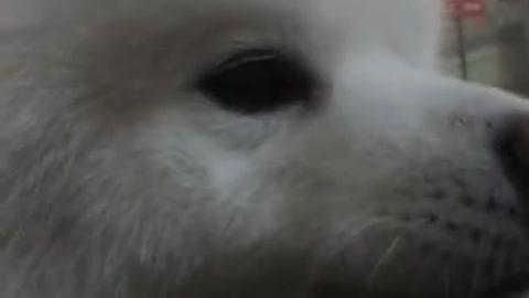 Dog speak some things