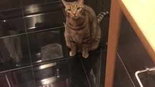 Curious Cat Gets Head Stuck in Treat Bin