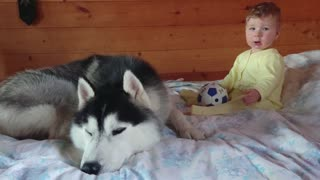 Kid and Husky learning to play football