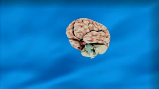 The importance of brain and health