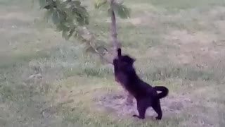 Charlie scratches tree