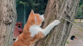 Playing With A Cat While It Trying To Climb On A Tree
