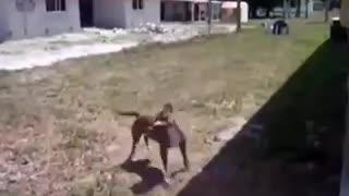 funny behavior of animals