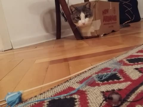 Cat loves boxes