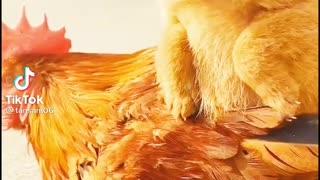 Deep relationship between dog and hen ❤️