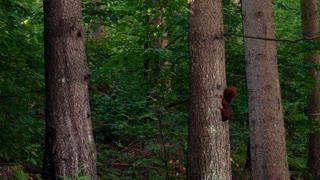 Squirrel Brown