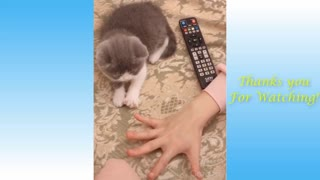 human and pet funny video