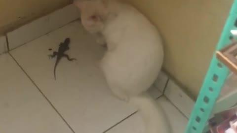 Babalu playing with lizard
