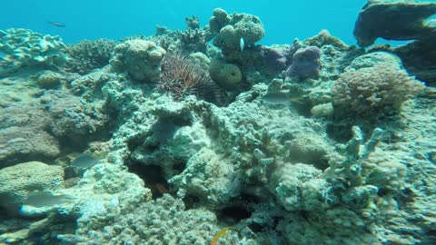 Coral reefs and water plants in the Red Sea, Eilat Israel 5
