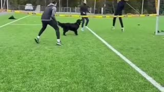 dog playing volleyball with family