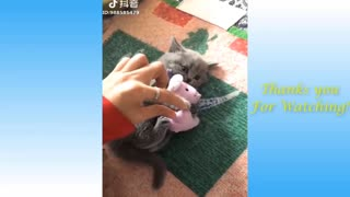 kitten dancing and getting ready