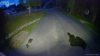 Security Camera Captures Bear Chasing Moose