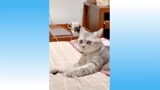 Cat recorded in hiding look what happened