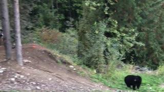 Mountain Bike Jumps Bear