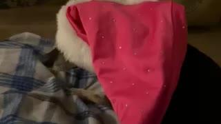 Dog wearing Santa hat
