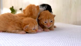Newborn fluffy kitten