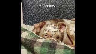 Si Senior