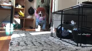 Doggo Loves to Dress Up