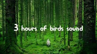 3 hours of bird sounds