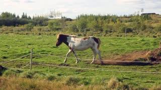 Horse - Animal Farm - crazzy horse