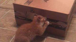 Kittens unnamed