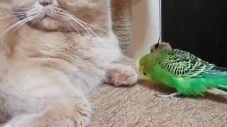 Кот и птица, милые животные