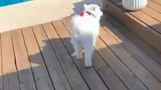 Puppy Tries out the Pool