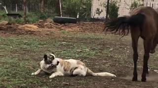 Best Friends Having Fun on the Farm