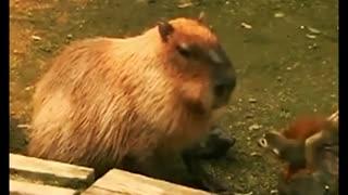 Funny animals video 2020