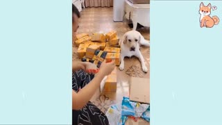 Smart Dogs / Cute puppies