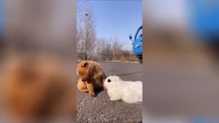 WATCH THESE GOOFY DOGS! very funny...