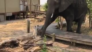 Elephant Is Going