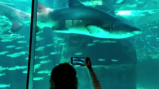 Woman approaches the shark