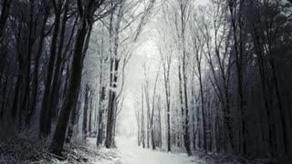 What is Operation Dark Winter?