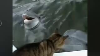 Love Between Dolphin And Cat