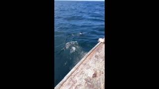 Huge Fish Caught!