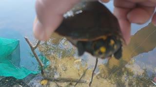 beautiful turtle turtle