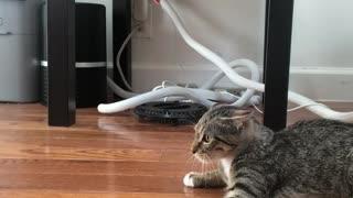Socializing a Spicy Feral Kitten