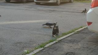 Brave kitten