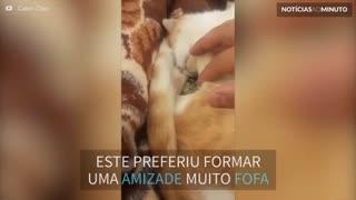 Gato adota passarinho abandonado e formam uma amizade inusitada