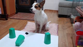 Genius doggy won't be fooled by owner's magic trick