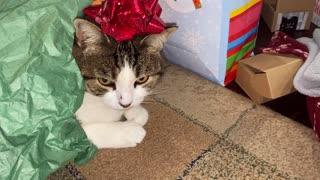 Festive Kitty Cat
