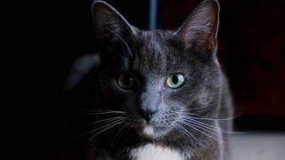 Black cat black cat